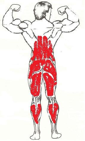 Какие мышцы задействованы при приседании (зад)