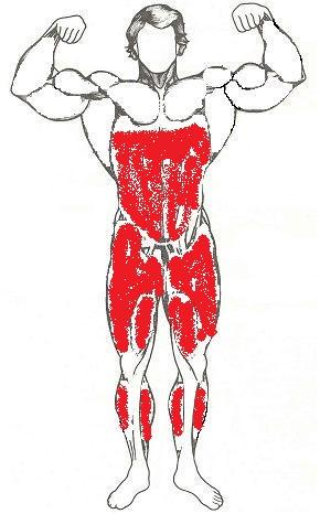 Какие мышцы задействованы при приседании (перёд)
