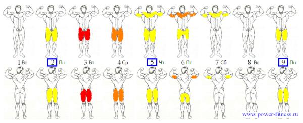 частота-тренировок-пример